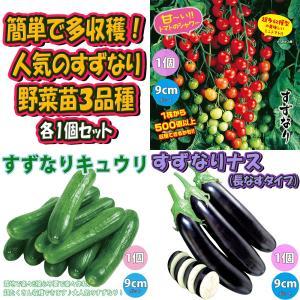 トマト苗 キュウリ苗 ナス苗 厳選人気品種 3種3個セット販売 野菜苗 自根苗 9cmポット 送料無料 お買い得セット14|itanse