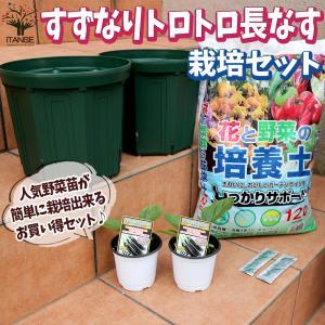 お買い得!栽培セット すずなり長ナス   野菜の苗  9〜10.5cmポット苗 お買い得2個セット  送料無料|itanse