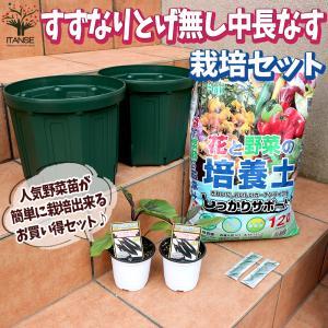 お買い得!栽培セット とげ無し中長なす 野菜の苗  9〜10.5cmポット苗 お買い得2個セット  送料無料|itanse