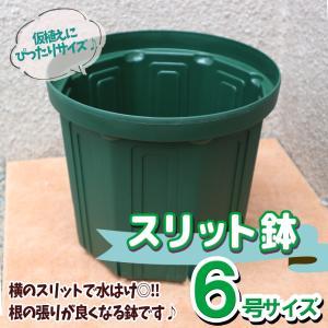 人気の植木鉢 スリット鉢 6号 1個 野菜 花 果樹 ハーブのプランターとして人気 送料無料 itanse