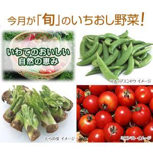 いわての畑から採れたて新鮮 【 野菜お届け便 5月号 】...