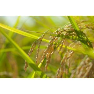 玄米 徳島県産 農薬・肥料不使用 自然栽培米「あきさかり」1等級 5kg itempost