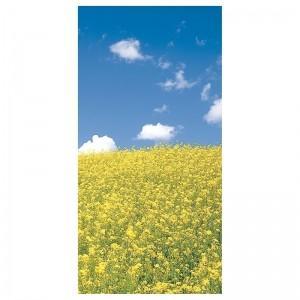 【装飾品 ひな祭り・お花見】タペストリー NEW菜の花|itibei