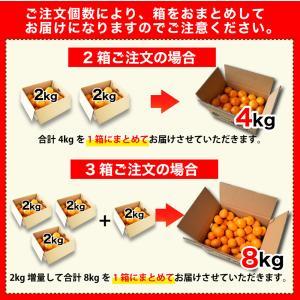 みかん 訳あり 2kg 和歌山  自宅用 大粒 中粒 ミックス 箱買い ご当地 お取り寄せ 2つ買うと送料無料 3箱買うと1箱おまけ|ito-noen|12