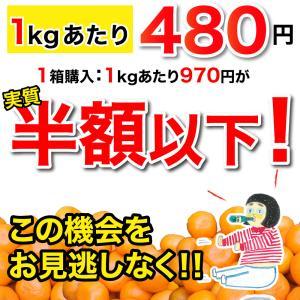 みかん 訳あり 2kg 和歌山  自宅用 大粒 中粒 ミックス 箱買い ご当地 お取り寄せ 2つ買うと送料無料 3箱買うと1箱おまけ|ito-noen|09