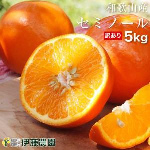 みかん/ミカン/蜜柑/mikan/mikann/フルーツ/かんきつ/柑橘/柑橘類/お試し/訳あり/デ...
