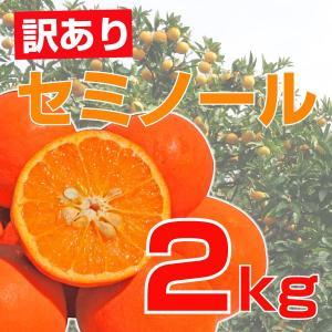 伊藤農園 訳あり セミノール 2kg 和歌山県産 みかん農園...