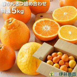 旬 みかん オレンジ かんきつ 詰め合わせ 5kg 和歌山みかん フルーツ 盛り合わせ 福袋 お楽し...