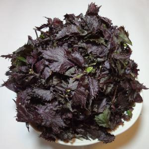 赤しそ(梅ぼし漬けや紫蘇ジュース作りに)葉のみ約200g福岡産