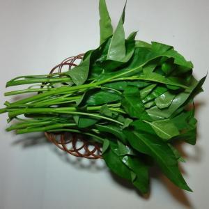 エンサイの茎は、中空なので空芯菜とも呼ばれています。ニンニクといっしょに炒め物にしたり、おひたし、ス...