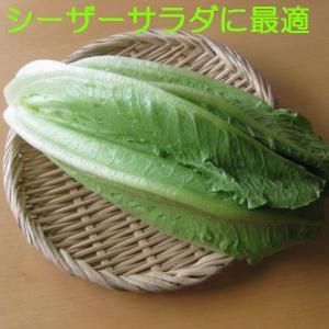 ロメインレタス 福岡産