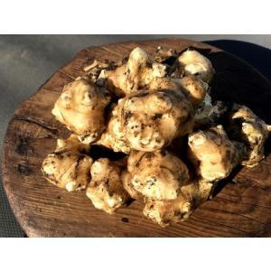 【無農薬栽培】菊芋(キクイモ)の種芋(20個)※栽培説明書付き|itomedetashi