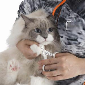 猫壱 ストレスなくスパッと切れる猫用爪切り 日本製