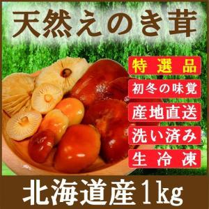 きのこ えのき茸 天然 1kg 北海道産 生冷凍 エノキタケ ユキノシタ ナメタケ|iwafo