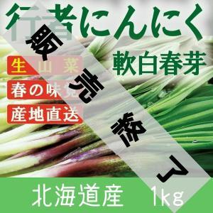 【2021年 予約】行者にんにく 芽 北海道産 1kg 天ぷら醤油漬け餃子に最高 生山菜 ギョウジャニンニク|iwafo