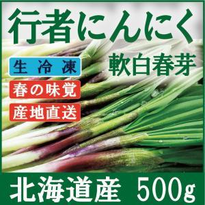 行者にんにく 芽 急速冷凍 北海道産 500g(100g×5袋) 醤油漬けや餃子に最高 生山菜 ギョウジャニンニク|iwafo