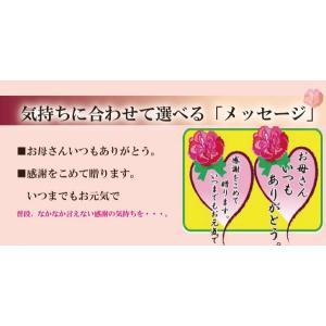 母の日 特別ギフト仕様 ひやし飴の素「ありがとうメッセージ」|iwaiseika|04