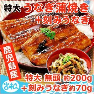 うなぎ 蒲焼 国産 送料無料 特大 約200g1尾+刻みうなぎ70g