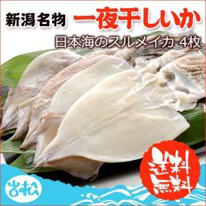 一夜干しイカ4枚  新潟名物 日本海のイカ 送料無料 |iwamatsu-salmon