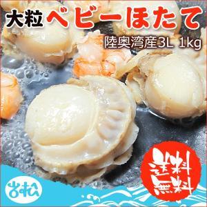 大粒ベビーホタテ 3L 陸奥湾産 送料無料|iwamatsu-salmon