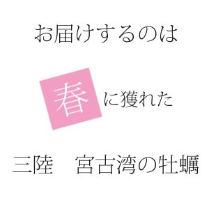殻付き牡蠣(冷凍) 10個 三陸宮古産 加熱用 送料無料 同梱不可|iwatekensan-netshop|03