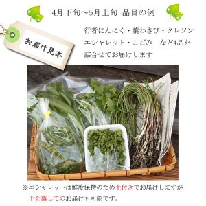 山菜と季節の野菜 詰め合わせ  予約受付中|iwatekensan-netshop|04