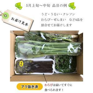 山菜と季節の野菜 詰め合わせ  予約受付中|iwatekensan-netshop|05