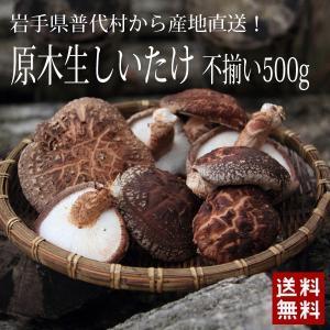 原木生しいたけ500g(不揃い) 予約受付中 【同梱不可】9836