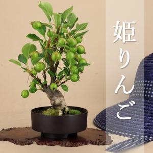【商品名】 - 青いりんご - 姫リンゴ 小品盆栽(プラ鉢)  あでやかな春花、さわやかな夏の青い果...