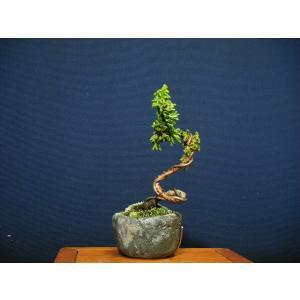 石化ヒノキ>小品盆栽素材|izubonstore
