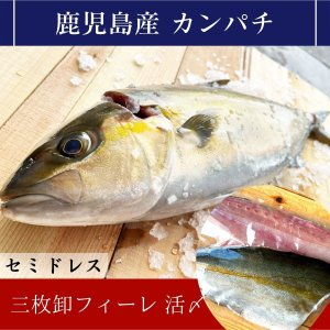 カンパチ 三枚卸 活〆 鹿児島産|izumida-sengyo
