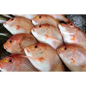 干物 れんこ鯛の一夜干し 無添加 熟成乾燥|izumida-sengyo|02