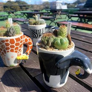 【伊豆シャボテン本舗限定】サボテン 多肉植物 寄せ植え 選べる アニマルマグ   おしゃれ インテリア 動物マグカップ キッチン雑貨 izushabotenhonpo