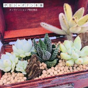 【伊豆シャボテン本舗限定】海賊 宝箱 木製 サボテンと多肉植物の寄せ植え   小物ケース インテリア ボックス izushabotenhonpo