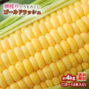トウモロコシ 和歌山県とんだ産 朝採りとうもろこし ゴールド...