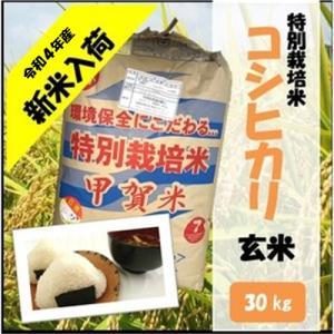 滋賀県産近江米 JAこうか 特別栽培米 コシヒカリ 玄米 30kg|jakouka