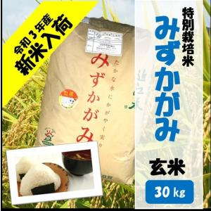 滋賀県産近江米 JAこうか 特別栽培米 みずかがみ 玄米 30kg|jakouka