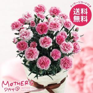 母の日ギフト 2018 カランコエ鉢植え 八重咲ウェンディ ...