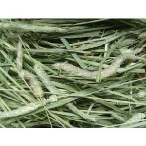 *new crop*30年度産アメリカ産プレミアムホースチモシー1番刈り1kg:シングルプレス(ウサギ等小動物向け)