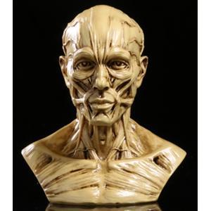 商品詳細  ・頭部模型 x 1 ・サイズ:約10cm(高さ)、約8.5cm(左肩から右肩までの幅)、...