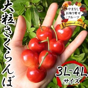 レーニア チェリー ギフト 山梨産さくらんぼ 秀 3L・4L...