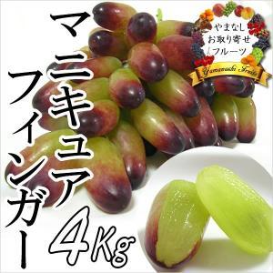 ギフト ぶどう 山梨産 マニキュアフィンガー 4kg 葡萄 ブドウ|jerichojericho