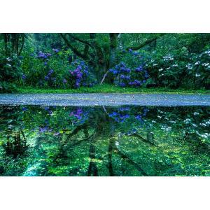ジグソーパズル EPO-71-928 風景 見帰りの滝と紫陽花-佐賀 300ピース 【あすつく】