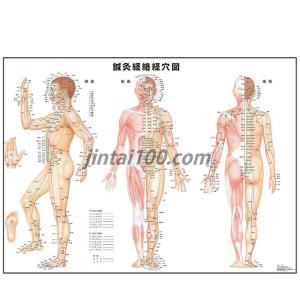 鍼灸経絡経穴図 OR028 人体図 医学ポスター 世界一流のメディカルイラスト