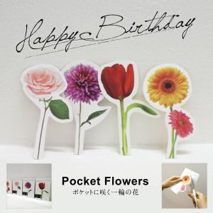 Pocket Flowers 「ポケットに咲く一輪の花」4枚セット バースデーカード