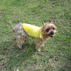 エスニック 民族系犬服 タイダイタンク イエロー 2号サイズ|johnlazz