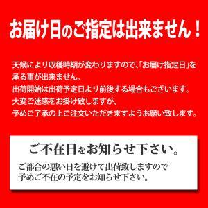 30年度産(送料無料)青森県産にんにく バラ500g(産地直送)ニンニク ホワイト六片|joppari|05