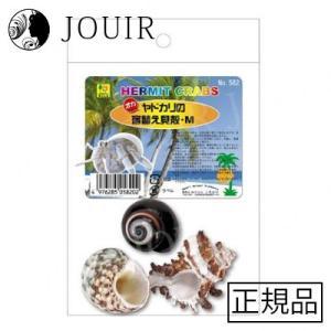 オカヤドカリの宿替え貝殻 M|jouir-jp