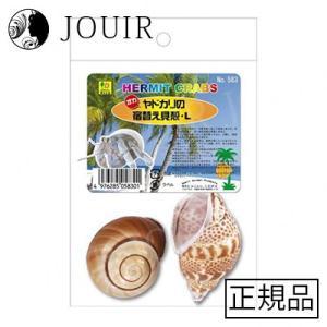 オカヤドカリの宿替え貝殻 L|jouir-jp