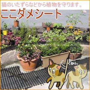 猫よけ ここダメシート 10枚入 園芸 ガーデ...の関連商品1